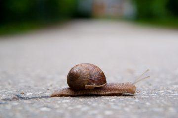 Slow as a snail
